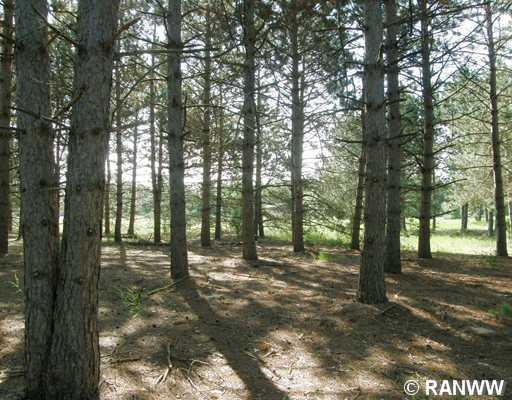 Land/Lot. Another on-lot view. Part of the fairway can be seen beyond the trees. The lot is sheltered by the forest so there is no golf ball liability. - Lot 5 Meadow Green Trailway  Danbury