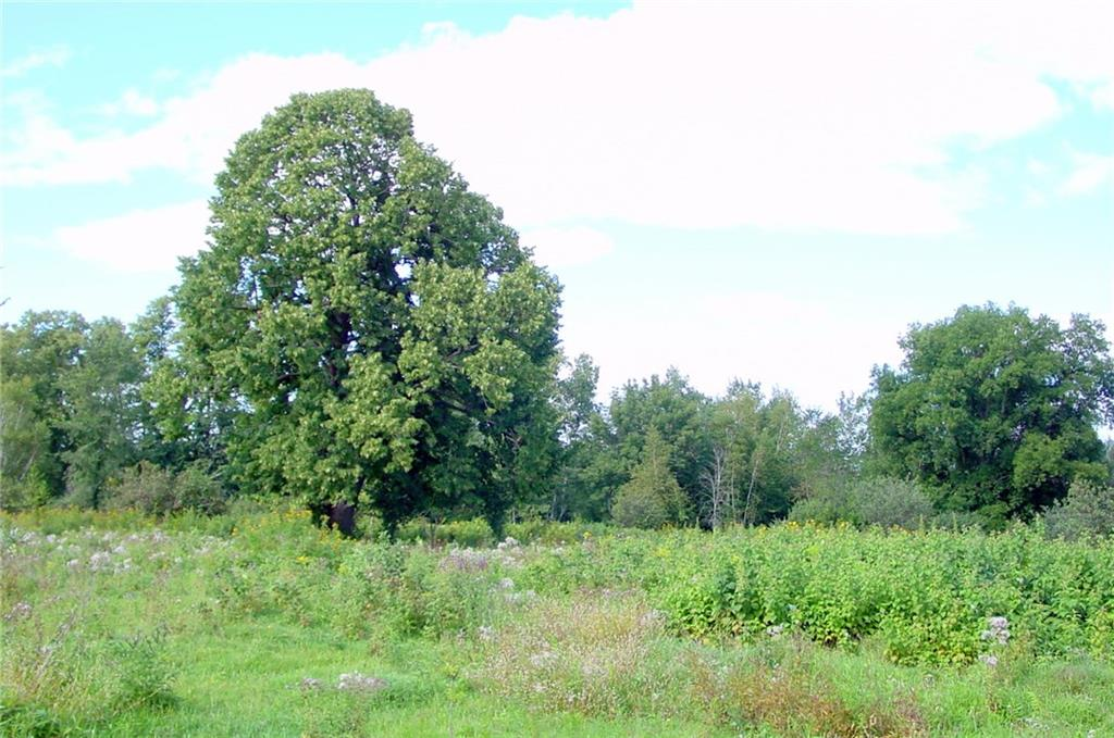 - 85 Acres via Easement  Conrath